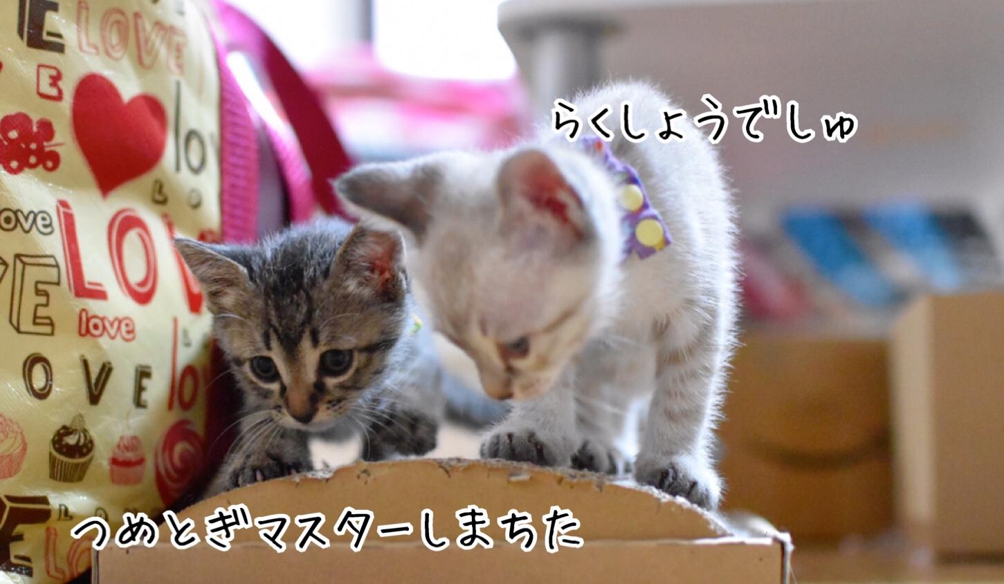 fc2blog_201811292122527fa.jpg
