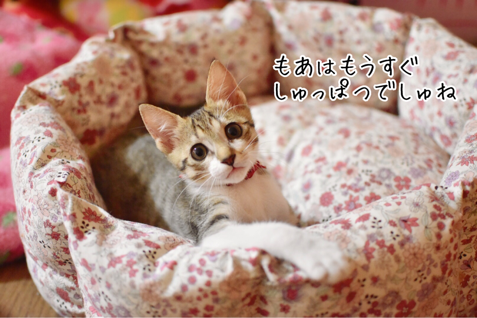 fc2blog_2018112921241716f.jpg