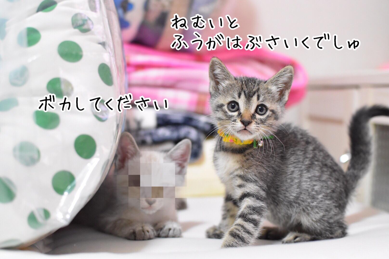 fc2blog_20181201210045316.jpg