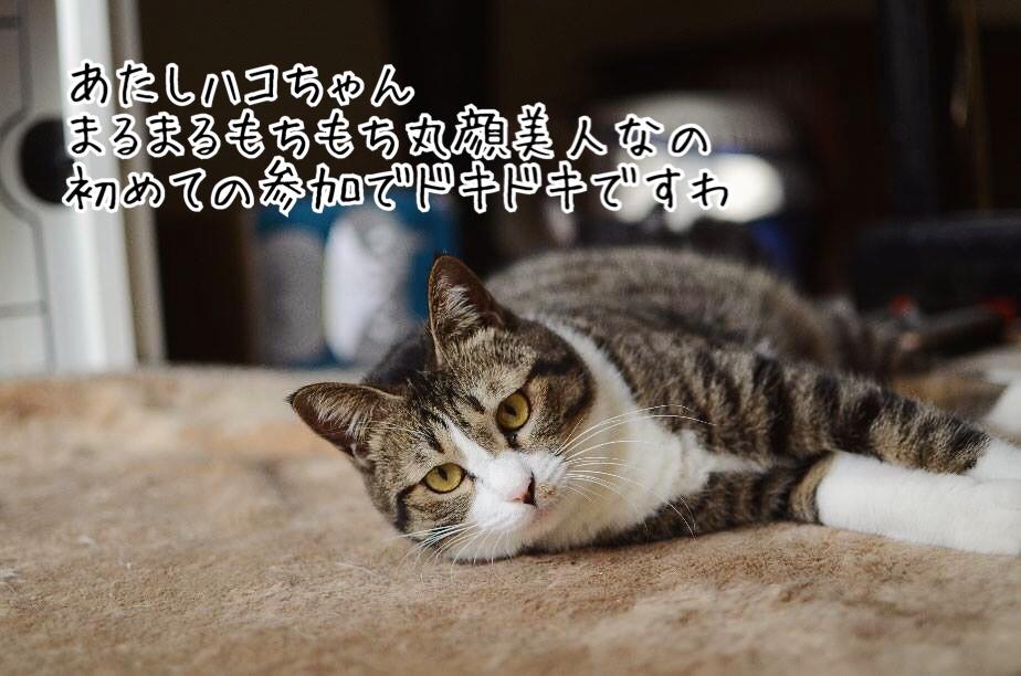 fc2blog_20190124172527672.jpg