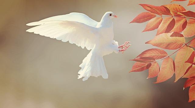 dove-2516641_640.jpg