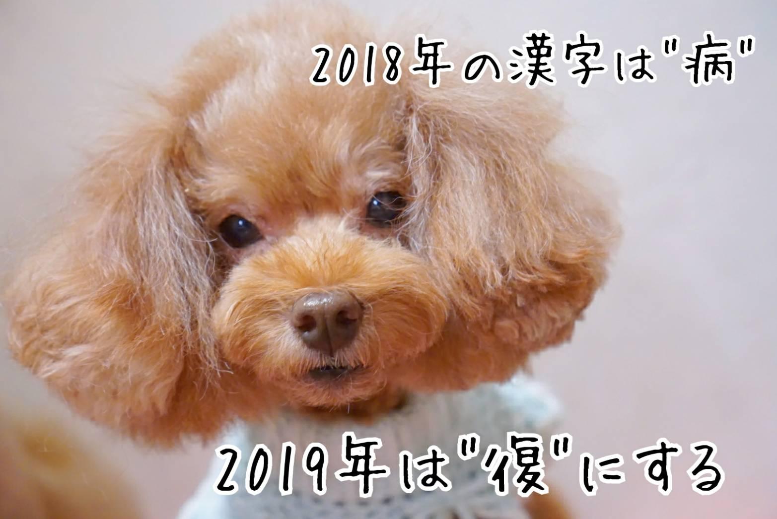 2018123114.jpg