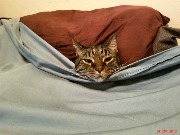 ベッドでお休み中6