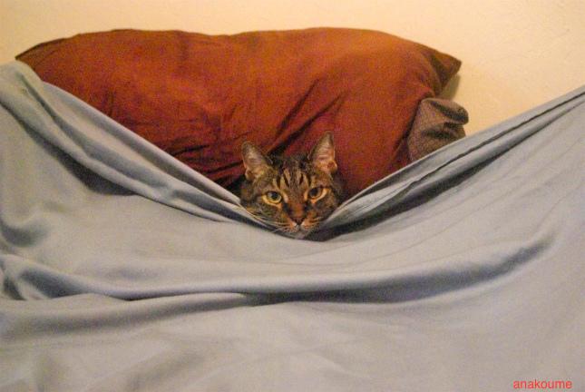 ベッドでお休み中1