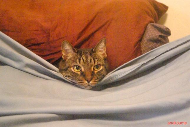 ベッドでお休み中2