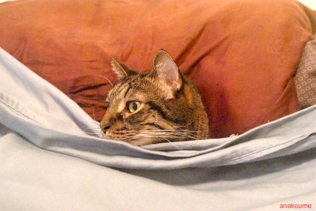 ベッドでお休み中5