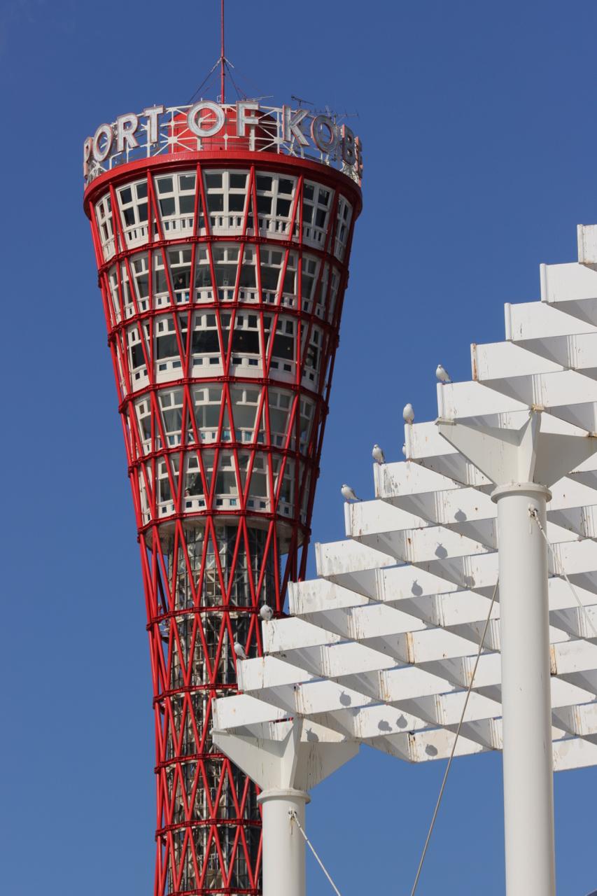 カモメとポートタワー