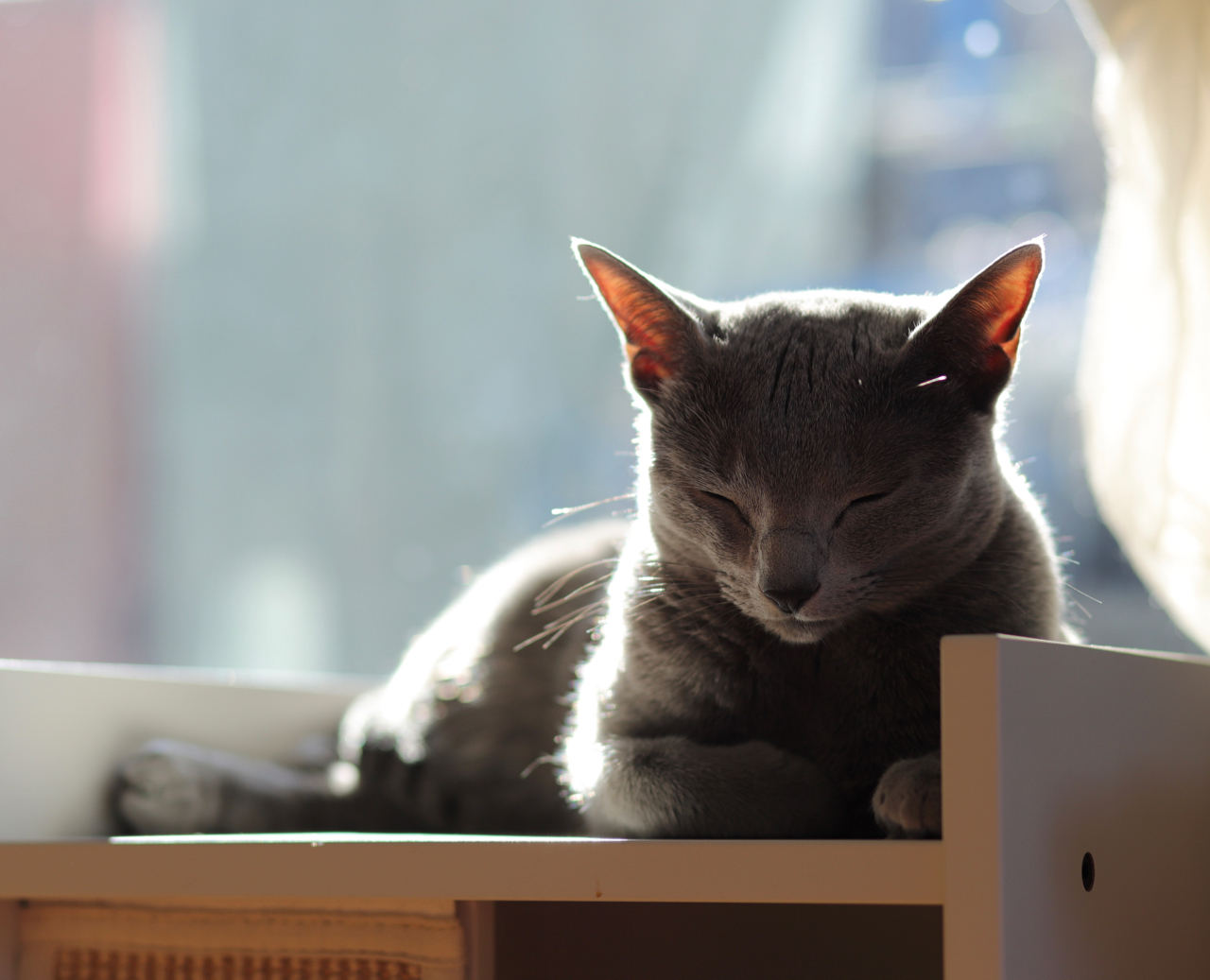 アン猫ベッド