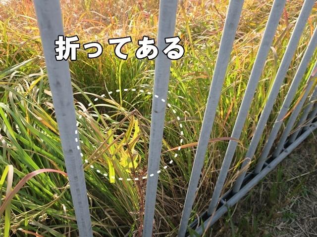 IMG_698220181130.jpg