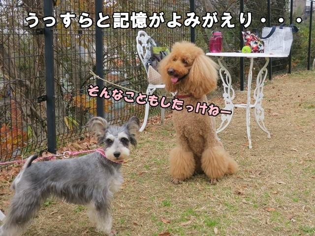 IMG_746920181222.jpg