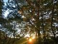 シラキと夕陽