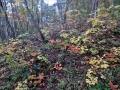 色とりどりの林床