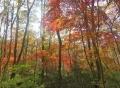 赤く輝く森