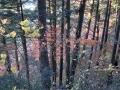 檜の木立と紅葉