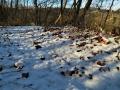 雪の尾根道