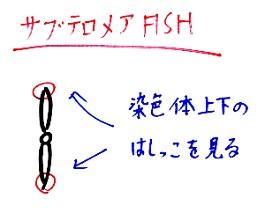 サブテロメアFISH1102 - コピー