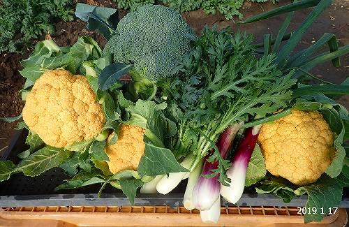 s-野菜20190117