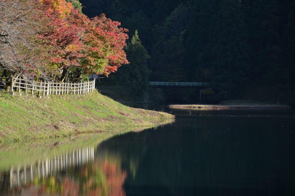 秋の日差し-1