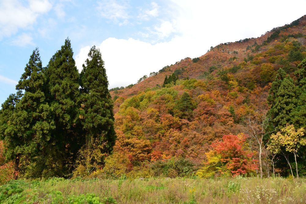 渓谷の紅葉-5
