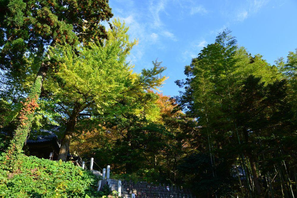 西生寺の緑-1