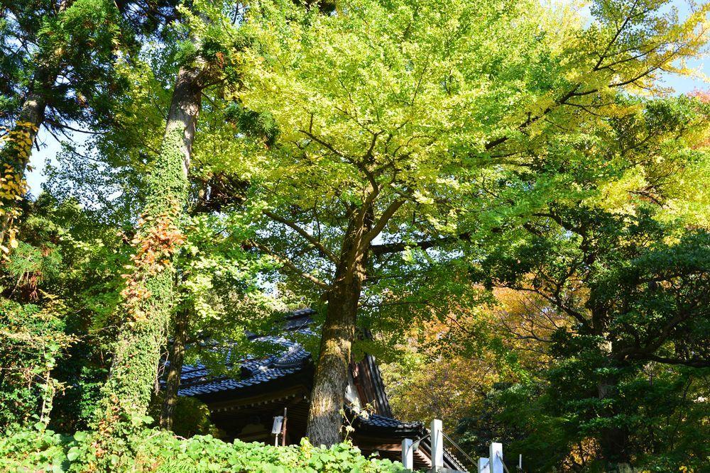 西生寺の緑-2