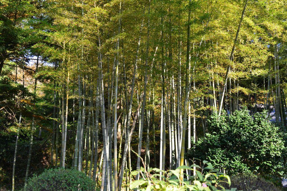 西生寺の緑-3