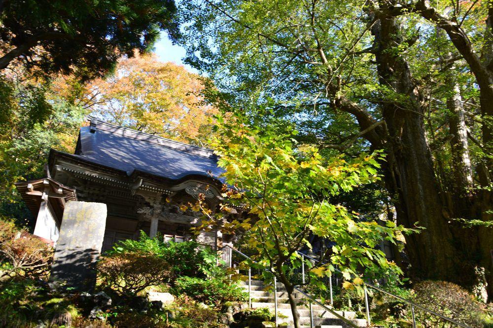 西生寺の緑-4
