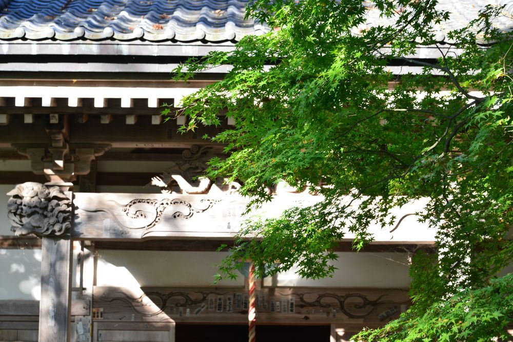西生寺の緑-5