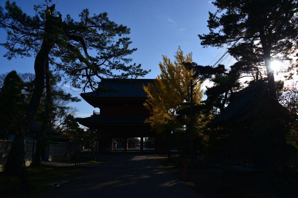 小春日和 本成寺-7