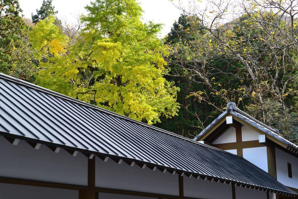 妙光寺の秋-4