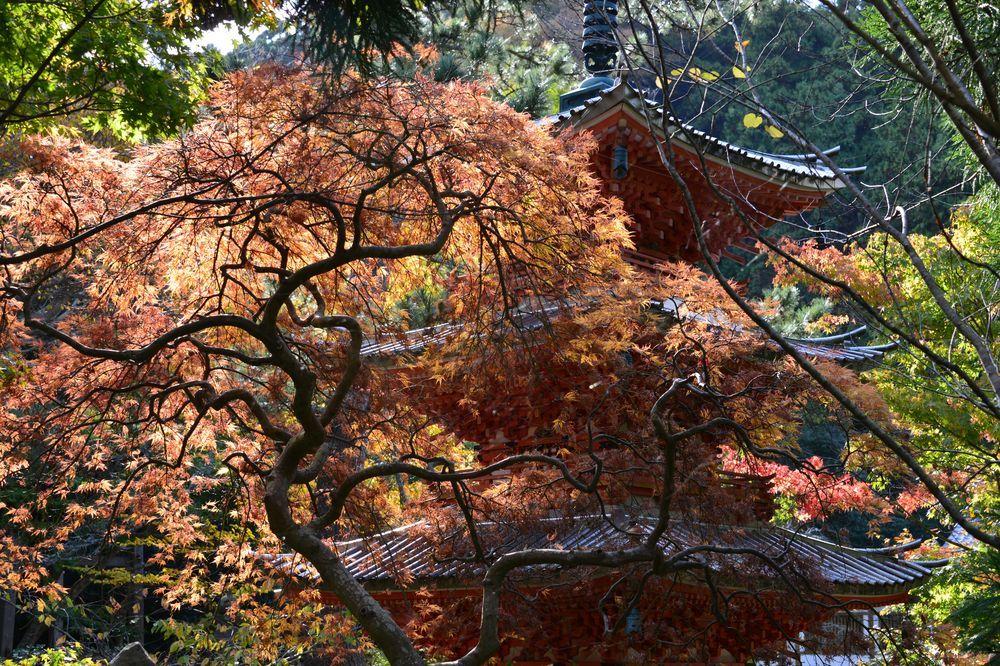 妙光寺の秋-5