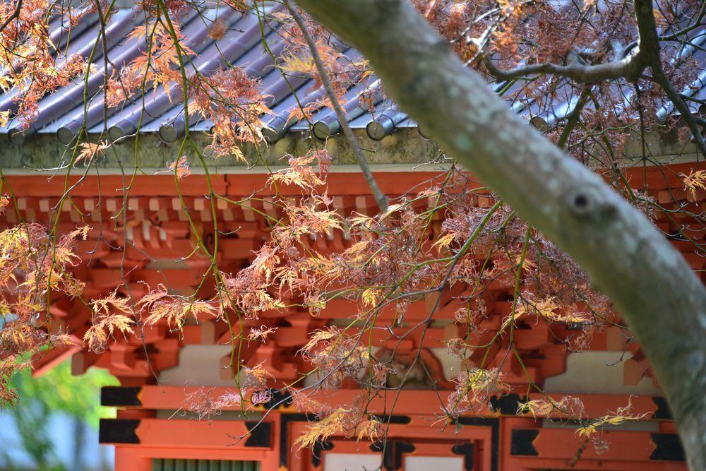 妙光寺の秋-6