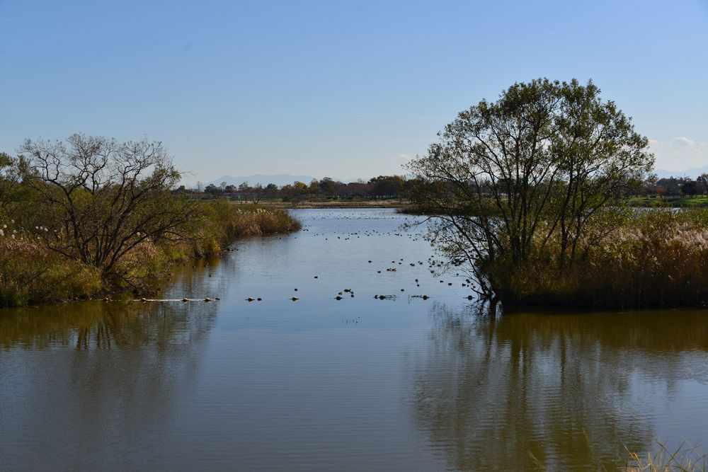 潟の水鳥-1