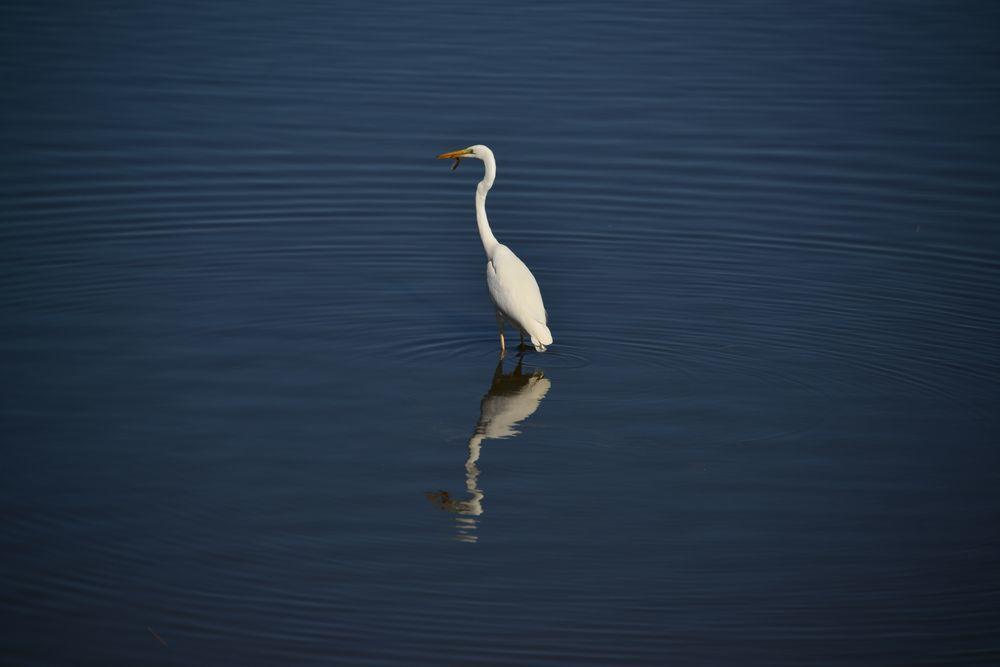 潟の水鳥-5