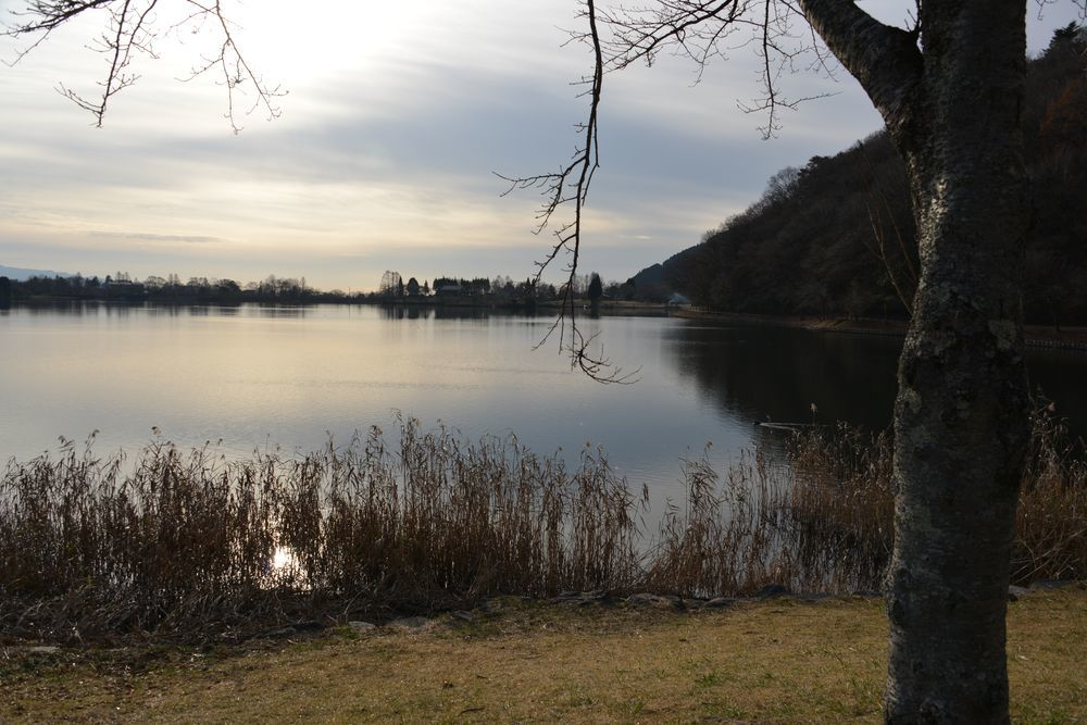 朝の田貫湖-5