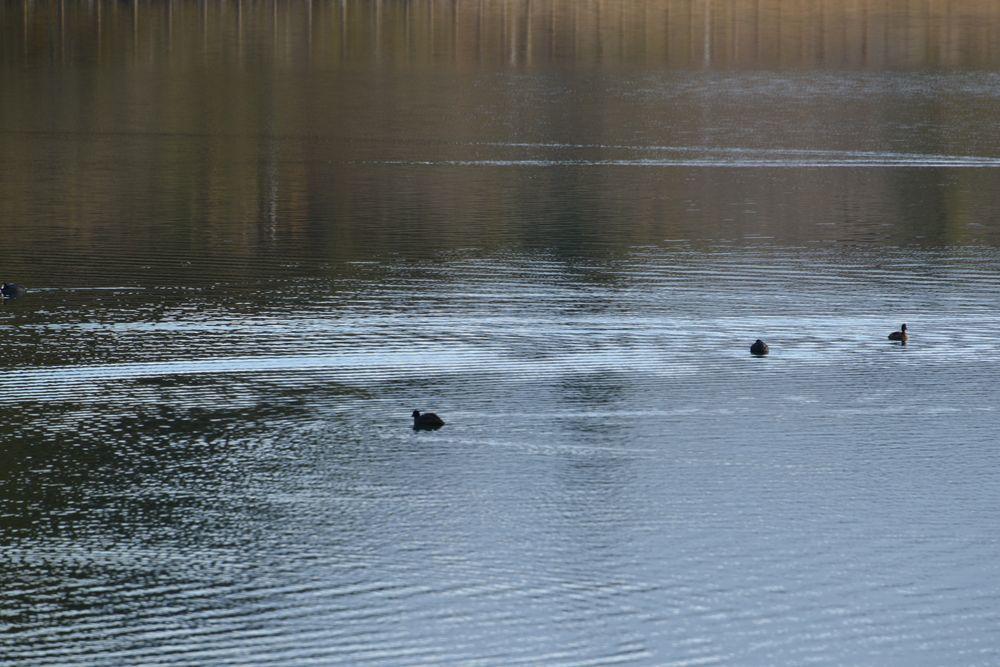 朝の田貫湖-6