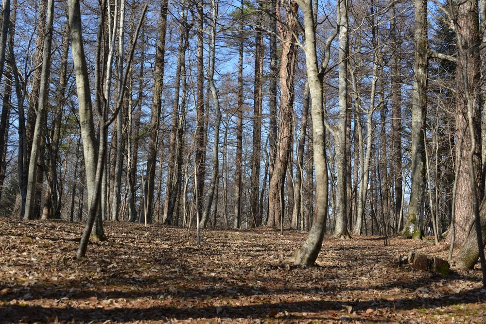 文学の森-3