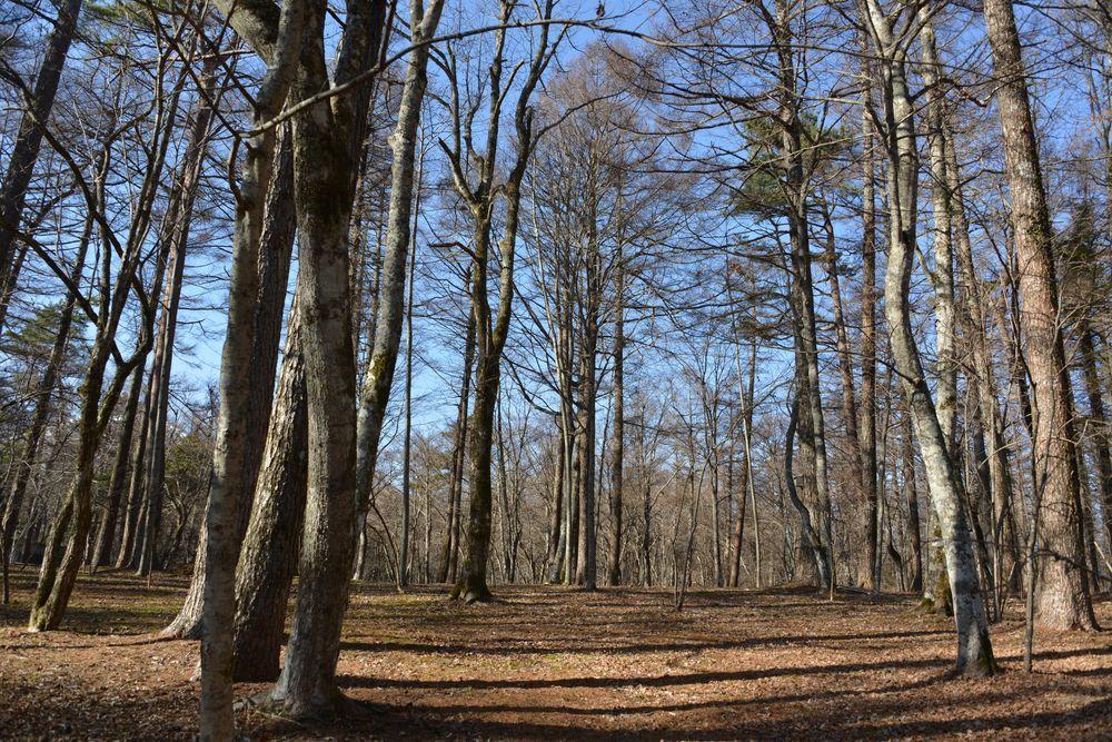 文学の森-4