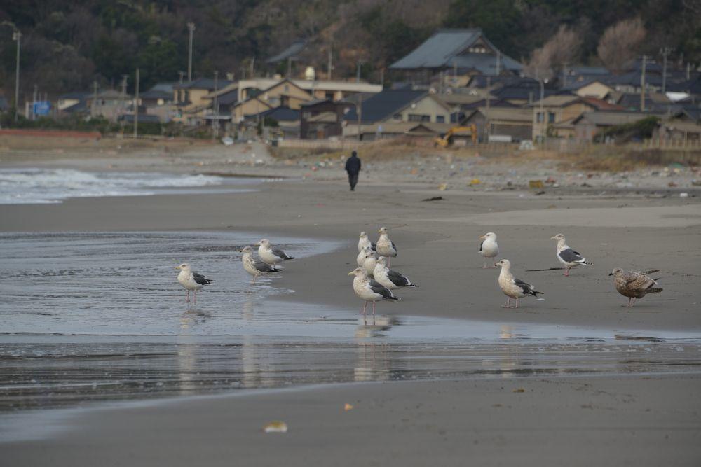 冬の海鳥-1