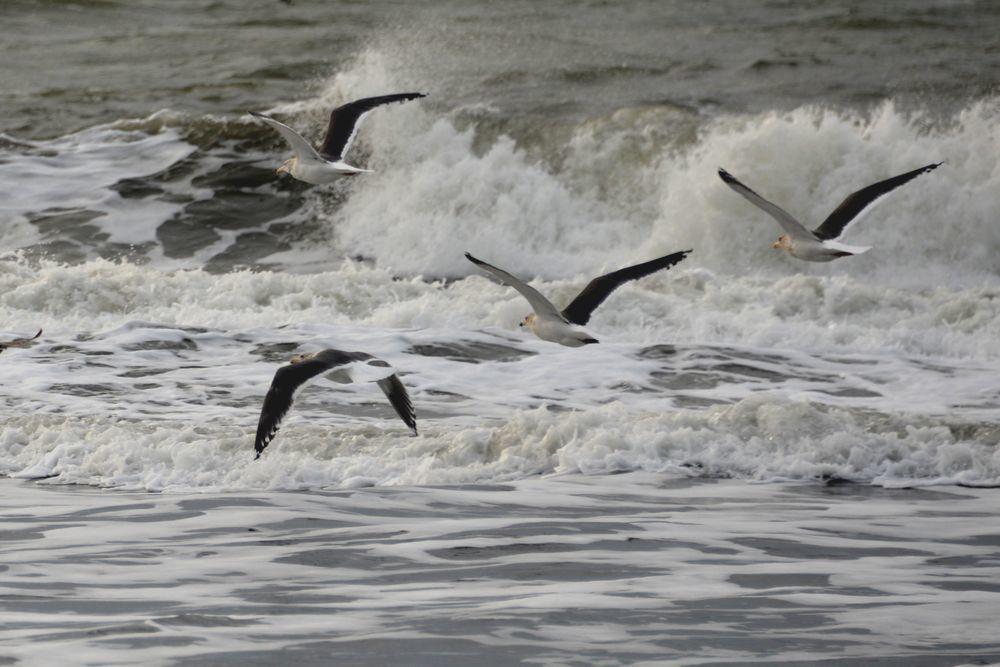 冬の海鳥-2
