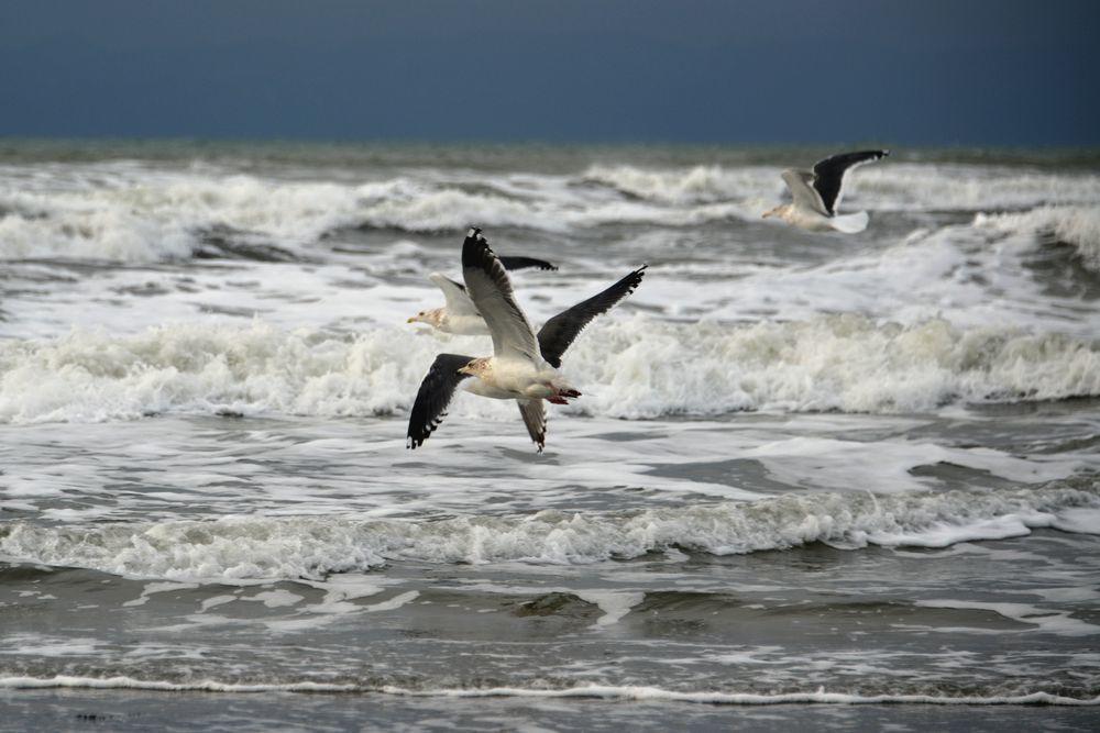 冬の海鳥-3