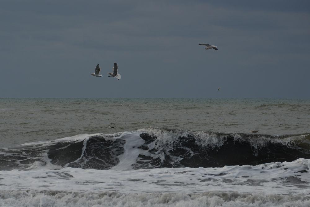 冬の海鳥-4