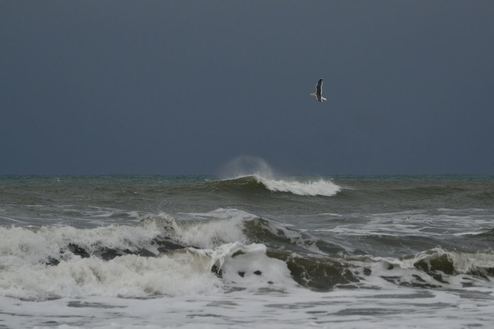 冬の海鳥-5