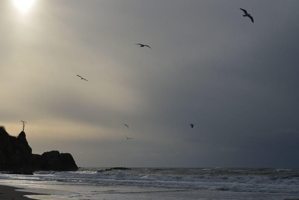 冬の海鳥-6