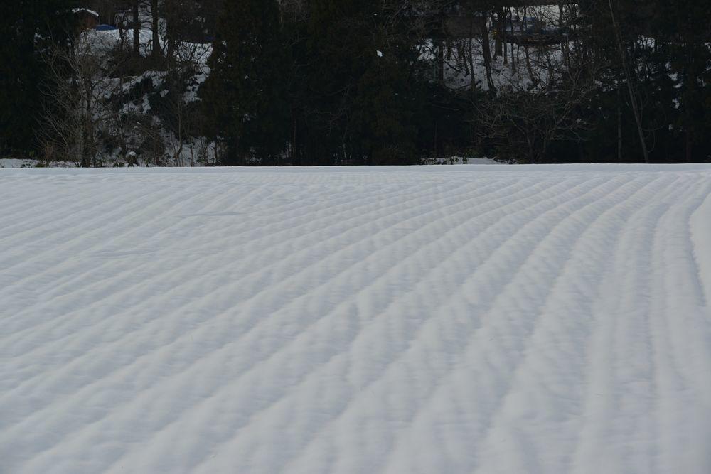 雪の景色-4