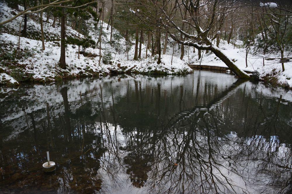 雪の池-1