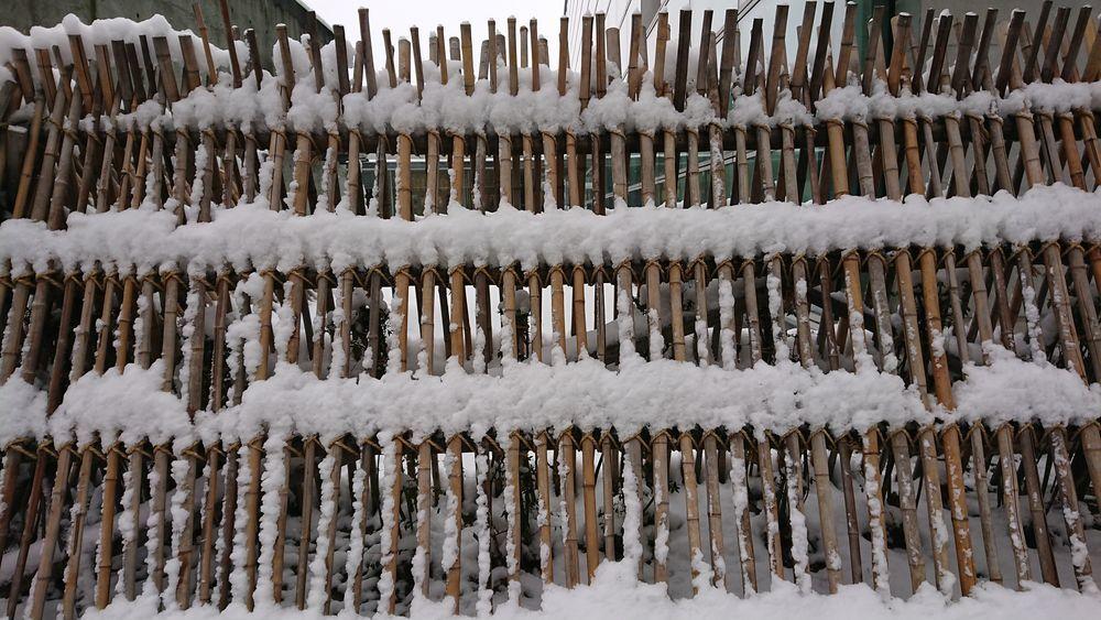 今日の雪-1