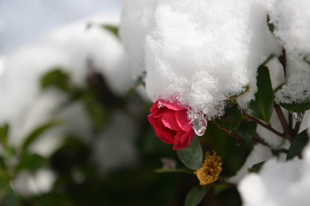 連休の雪-1
