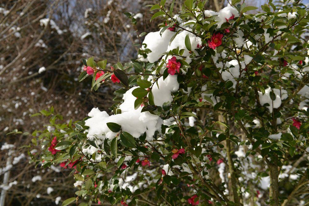 連休の雪-2