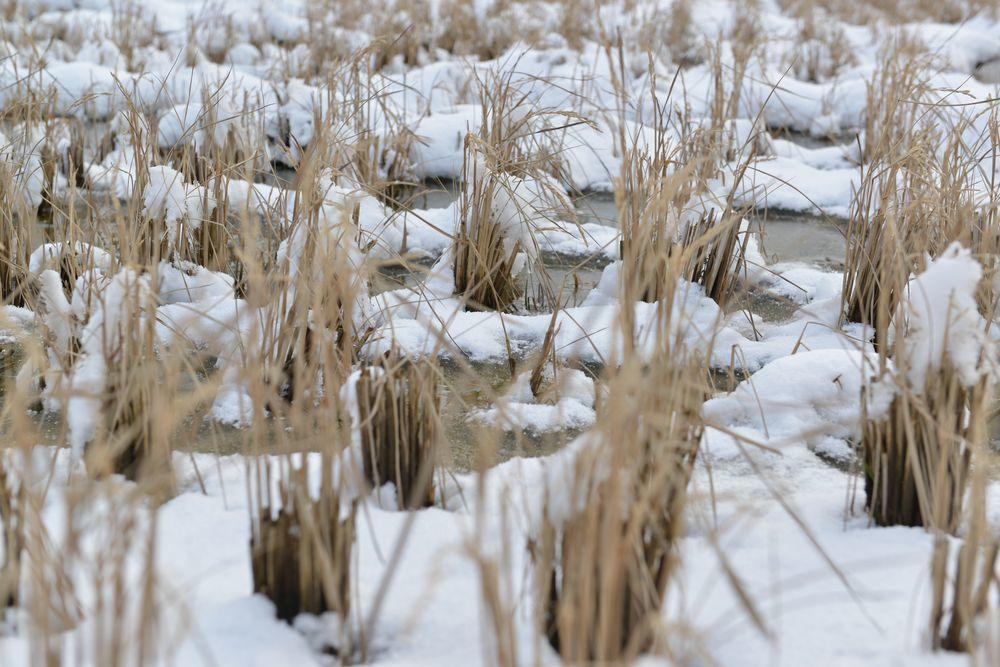 連休の雪景色-3
